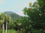 八丈島の朝.jpg