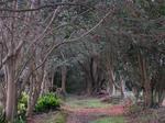 椿の森.jpg