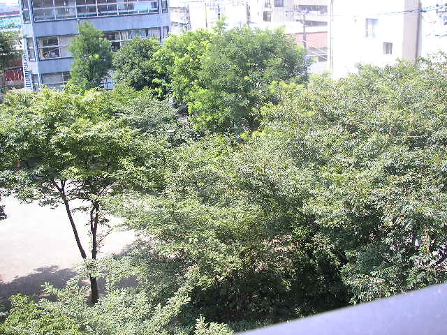 夏の公園1